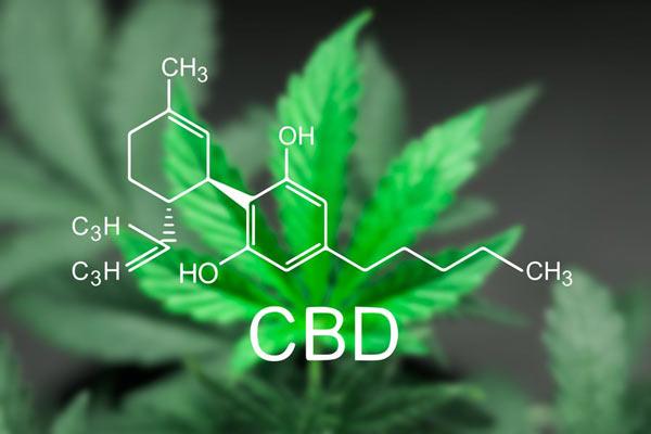 CBD - kannnabidiol - działanie i właściwości
