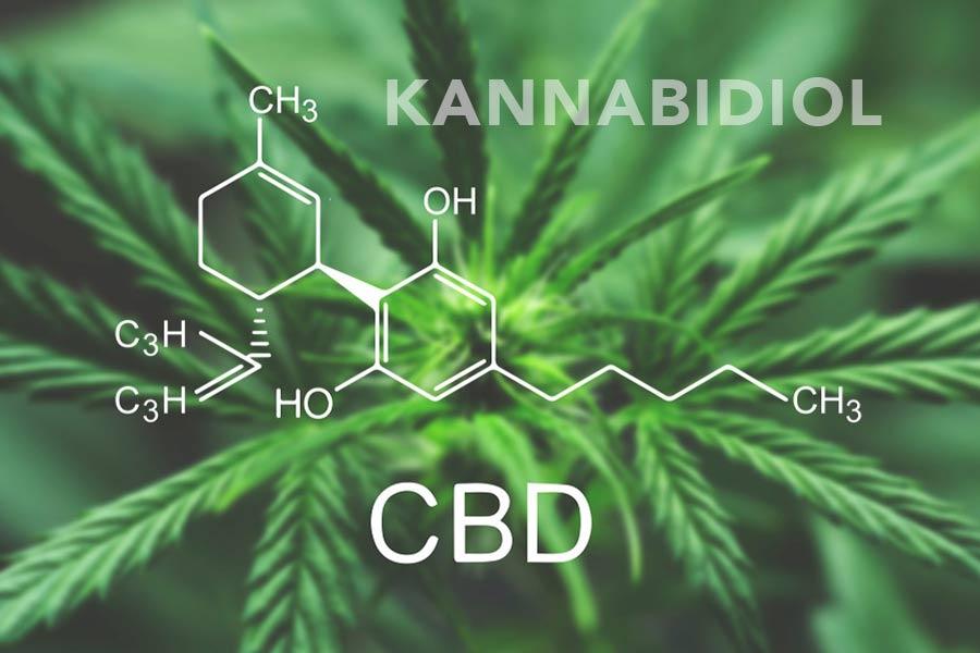 cbd kannabidiol i układ endoknnabinoidowy